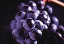 DO Rioja viñedos singulares