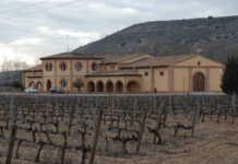 Ribera del Duero y la vendimia 2017