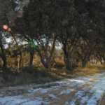 Trufa negra en Soria